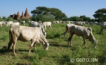 ミャンマー旅行47