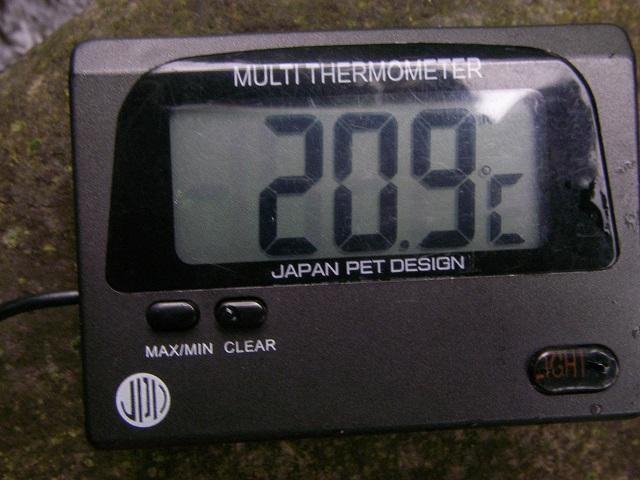 P8130358 小黒川 鉄橋上.jpg
