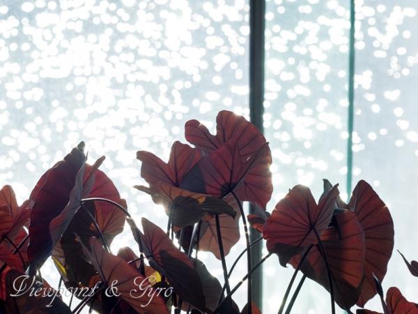 新宿御苑の温室 H
