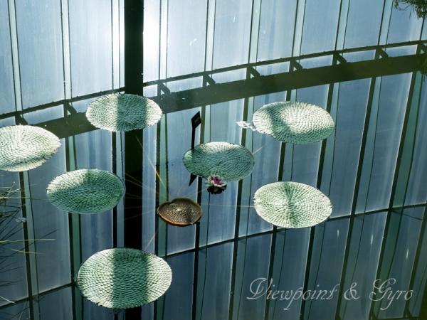 新宿御苑の温室 I