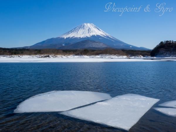 精進湖の氷結