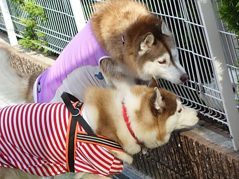 2人で小型犬さんに挨拶