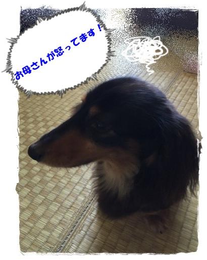 fc2blog_2015072610004418cA
