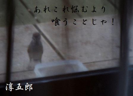 24JAN15 birds 002J5