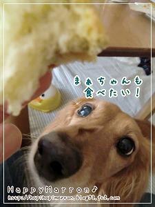 アキモトのパン試食3