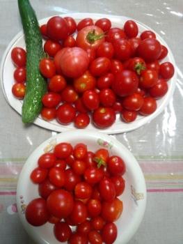 20150805収穫です。