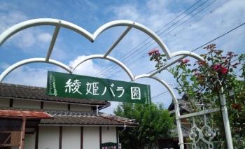 20150816綾姫バラ園8