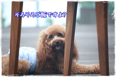 IMG_7851.jpg