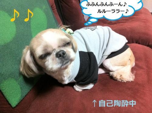 ichigo+11_convert_20150220140615.jpg
