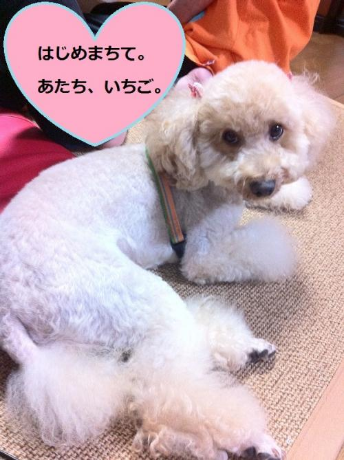 ichigo+1_convert_20150220140413.jpg