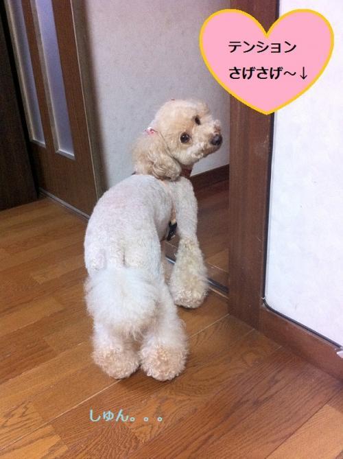 ichigo+2_convert_20150220140502.jpg