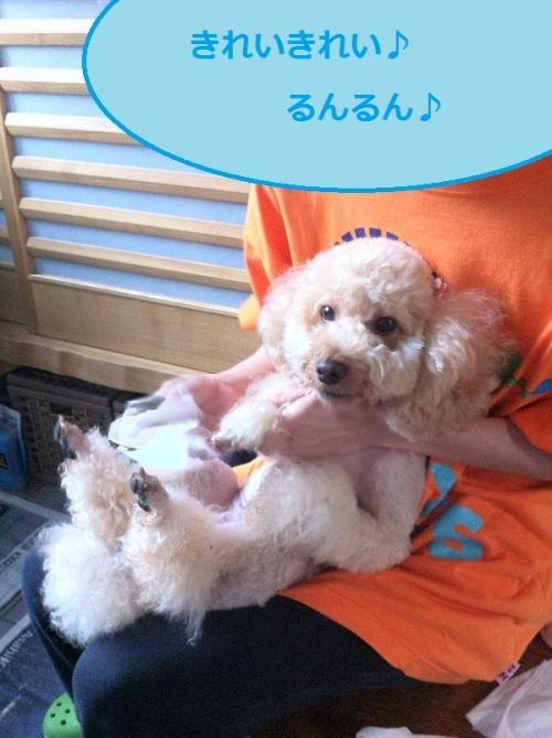 ichigo+3_convert_20150220142425.jpg