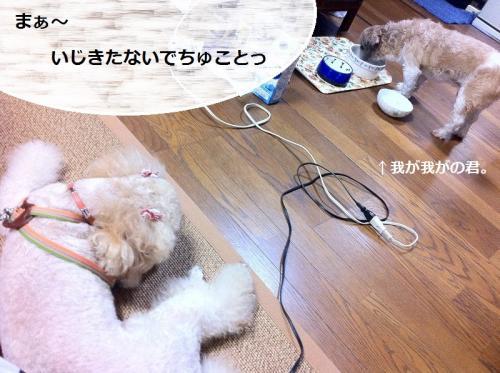 ichigo+5_convert_20150220140526.jpg