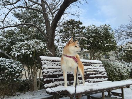 また雪だ~