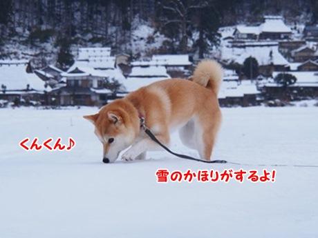 雪のかほり