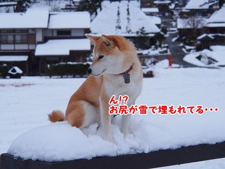 雪・・・?