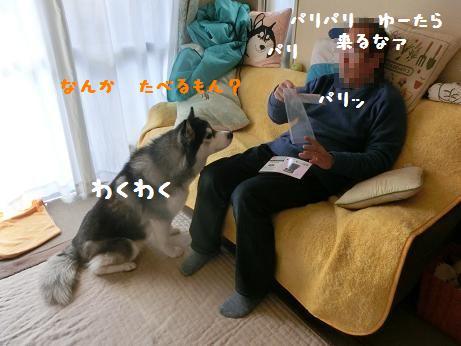 CIMG8419y.jpg
