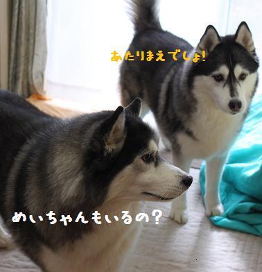 IMG_4613yo.jpg
