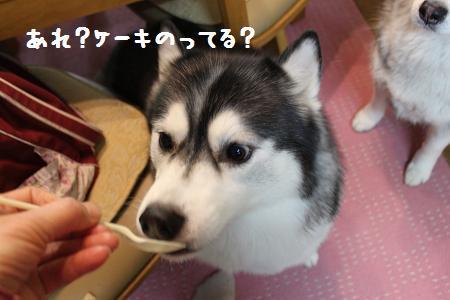 IMG_4666yo.jpg