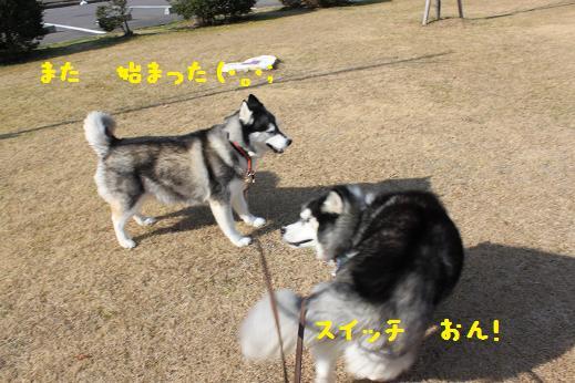 IMG_4888y.jpg
