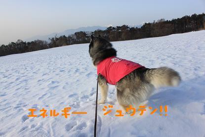IMG_5300y.jpg