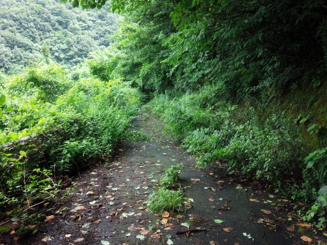 20150718_⑦林道