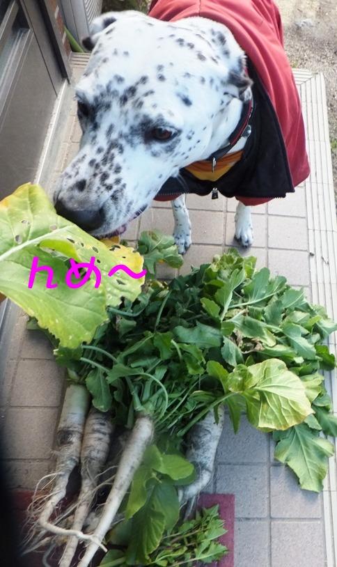 blog0201_110449.jpg