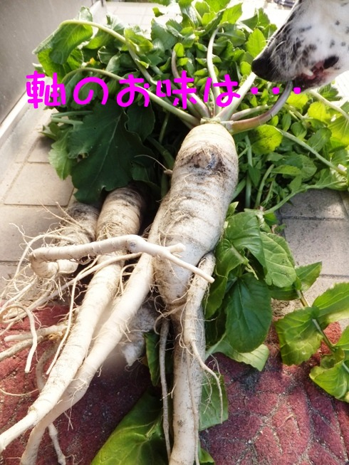 blog_0201_110601.jpg