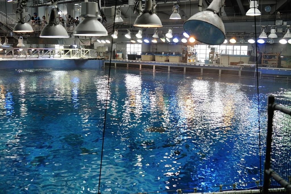 美ら海水族館・大水槽バックヤード