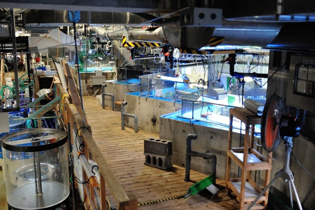 美ら海水族館・バックヤード