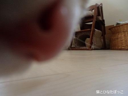 20150811_5.jpg