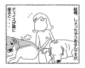 羊の国のラブラドール絵日記シニア!!「お尻のフタ」1