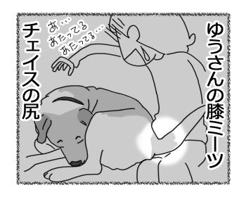 羊の国のラブラドール絵日記シニア!!「お尻のフタ」2