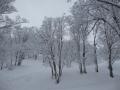 新雪もいっぱい@野沢温泉