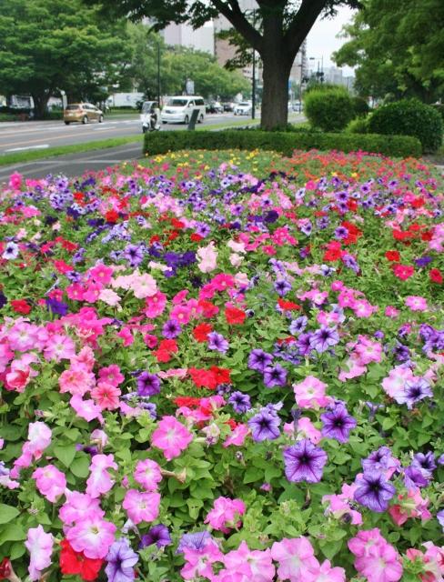 IMG_8654 平和大通り植栽(488x640)