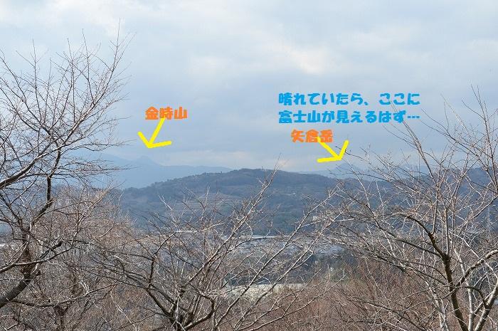 DSC_7206.jpg