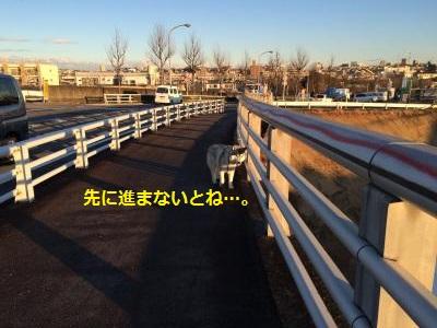 蜀咏悄2011_convert_20150126195114
