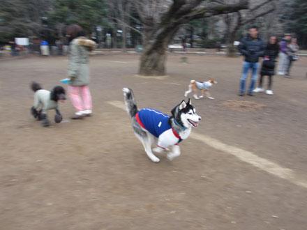 代々木公園ドッグラン