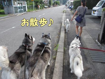 みんなで朝散歩