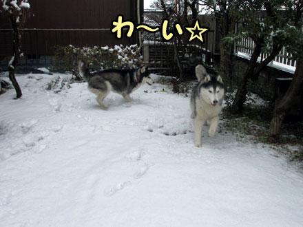雪が降ったよ