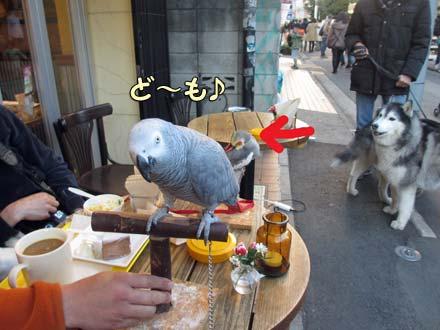 カフェの鳥さんズ
