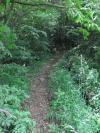 登山道突入