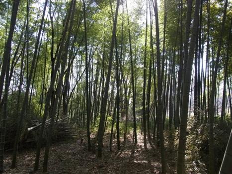 「北本自然観察公園(2)」