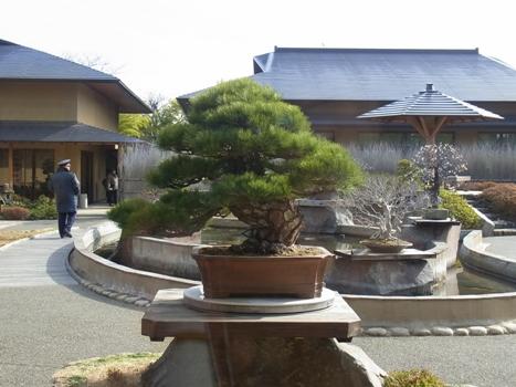 「さいたま市:大宮盆栽美術館(2)」