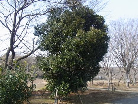 「きれぎれの風彩 「大宮花の丘農林公苑」(2)」