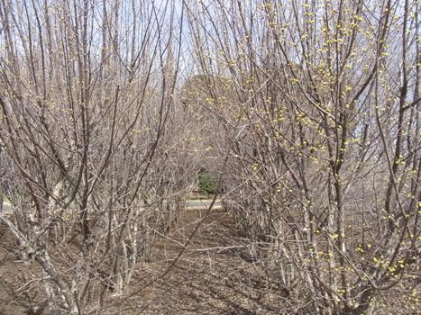 「きれぎれの風彩 「大宮花の丘農林公苑:サンシュシュ」