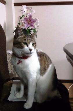 猫田聖子2