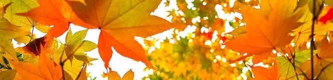 autumn-leaves_00008 (1)