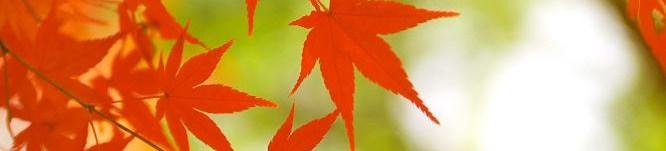autumn-leaves_00103.jpg