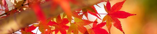 autumn-leaves_00117.jpg